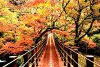ไปเที่ยวญี่ปุ่นแบบประหยัดสุดๆ ในช่วงใบไม้เปลี่ยนสีกัน